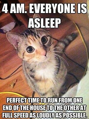 Funny Cat Meme 4 Am Fridge Magnet 5 X 3 5 Cat Quotes Funny Funny Cat Pictures Funny Cats