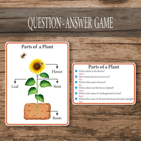 Biology Question-Answer Game Cards