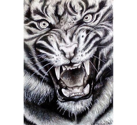 Dessin Réaliste Dessin Tigre Rugissant Réaliste Noir Et Blanc
