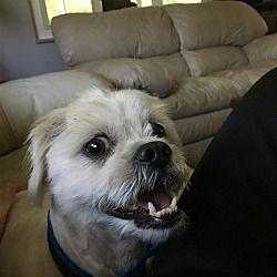 Pet Card Shelter Dogs Pets Cat Adoption