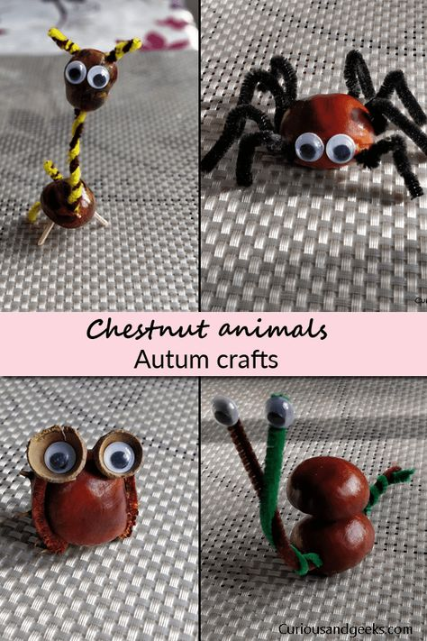 10 Diy Conkers Animals Autumn Crafts For Kids Fall Crafts For Kids Crafts For Kids Fall Crafts