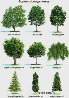 Tipos de arbustos con nombre