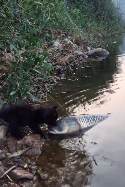 Ok you're too big bye bye 😺😁😁 #fishing #cats #kittens #cuteanimalshare #fishingcats #funnycats