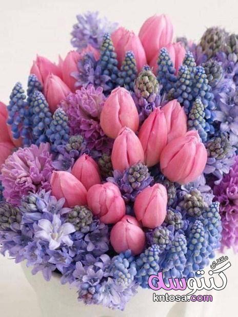 وردة توليب الجميلة اروع صور زهرة التوليب خلفيات ورمزيات وردة التوليب بالوانها Kntosa Com 07 19 155 Flower Arrangements Tulip Colors Country Flower Arrangements