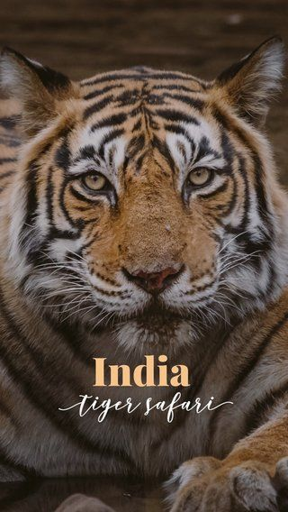 Stunning photos from a tiger safari in India