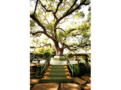 Happy Trails Garden Pasadena Ca California Wedding VenuesGarden