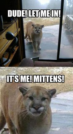 I have dreams that this will be Frodo one day. But also, having a cat at my back door would freak me the heck out!
