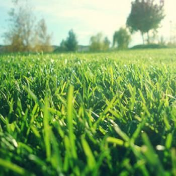 How To Get Grass Stains Out Using Stuff You Already Have At Home
