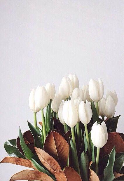 Bouquet Of White Tulips In 2020 Flower Aesthetic Tulips Art Flowers Bouquet