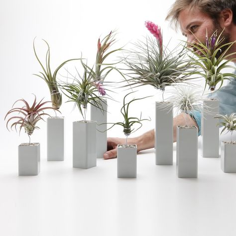 The Air Plant Vessel is the perfect holder and display for your air plant. Each one is handmade out of steel in California, making them as unique as the air plants they hold.
