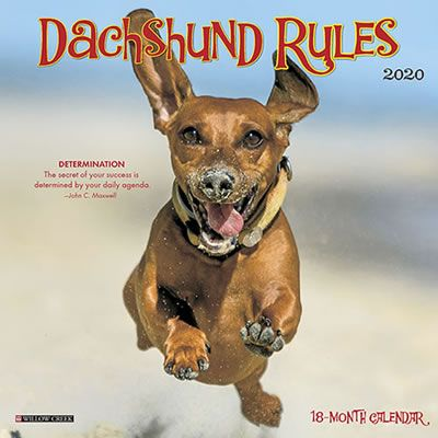 Dachshund Rules 2020 Mini Calendar Dog Thoughts Dachshund Mini