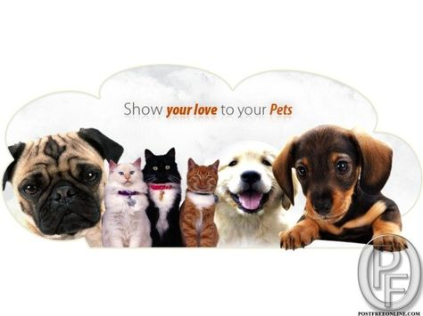 Pet Shop For All Kind Of Your Pet Needs Pet Shop Your Pet Pets