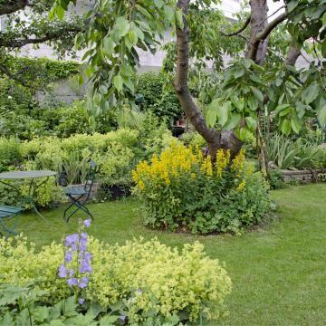 Rosmarin Uberwintern In 2020 Pflanzen Himbeeren Pflege Gartentipps