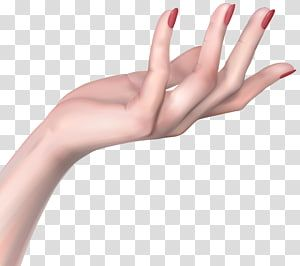Hand Woman Hands Transparent Background Png Clipart Clip Art Human Skin Color Hand Holding Something