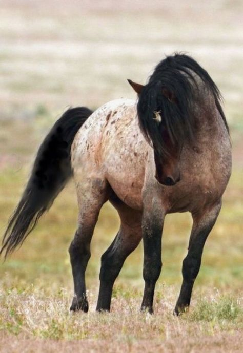 Uploaded by Gilmar Souza Silva. Find images and videos about horses on We Heart It - the app to get lost in what you love. Horses And Dogs, Cute Horses, Horse Love, Wild Horses, Animals And Pets, Cute Animals, Wild Mustang Horses, Most Beautiful Horses, All The Pretty Horses
