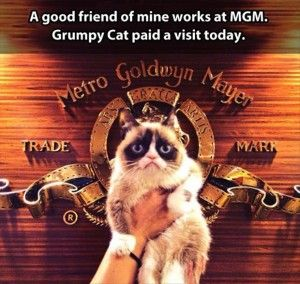 grumpy cat goes to mgm