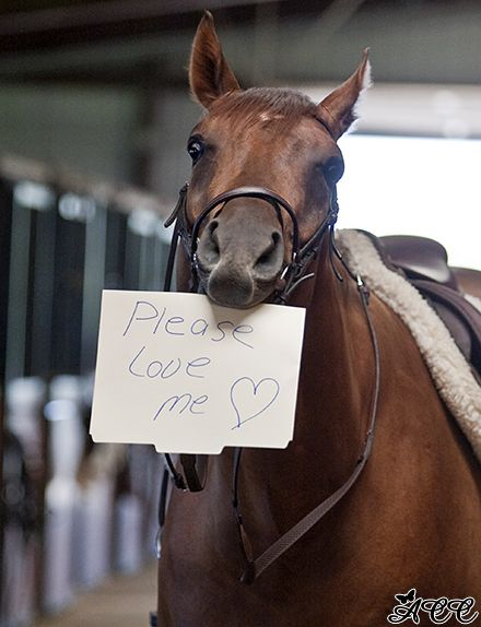 Please Love Me! There are to many horses going to auction and slaughter! Please do not take in a horse if you cant afford it or love it. This is true for any animal. Funny Horses, Cute Horses, Horse Love, All The Pretty Horses, Beautiful Horses, Animals Beautiful, Cute Baby Animals, Funny Animals, Gato Animal