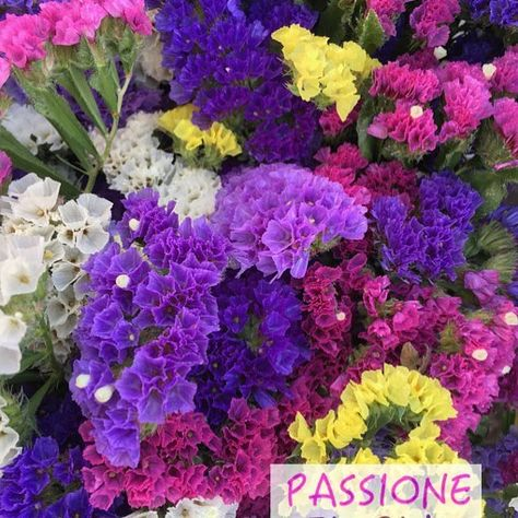 fiori Statice o Semprevivi i fiori...