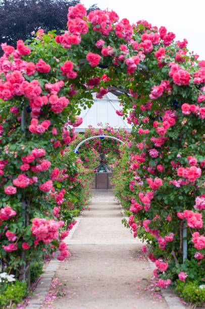 Rose Arch In The Park Planten Un Blomen Hamburg Germany Most Beautiful Gardens Beautiful Flowers Garden Beautiful Gardens