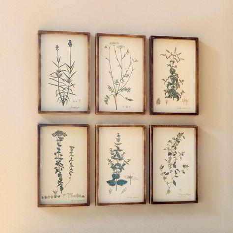 Botanical Vintage Style Framed Art Prints - Set of 6