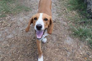 Adopt Copper On Dog Adoption Adoption Pet Search