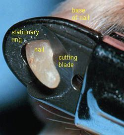 How To Trim Dog Nails Close Up Of The Guillotine Type Nail Trimmer Including Labeled Parts Dog Nails