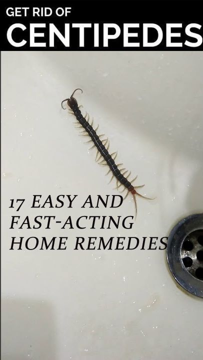 897084a92da2f71576dcdc016738ac28 - How To Get Rid Of House Centipedes In Apartment