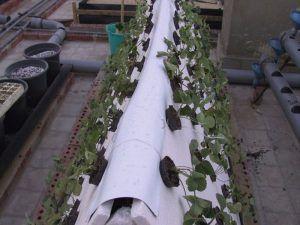 طرق زراعة اسطح المنازل Cultivation Method Rooftops Hydroponic Gardening Ladder Decor Outdoor Decor