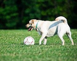 Puppy Training San Ramon New Dog Advice Any Age Puppy Training