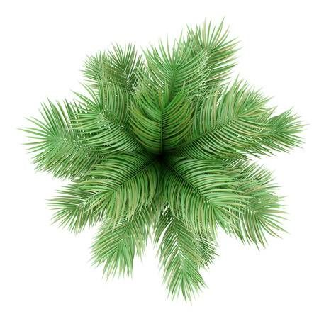 Top View Of Potted Palm Tree Isolated On White Background Trees Top View Tree Photoshop Landscape Design Drawings
