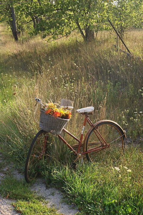Country Living ~ take a bike ride with nature. Country Life, Country Living, Country Roads, Country Art, Fairytale Garden, Old Bikes, Bike Art, East Sussex, Vintage Bicycles