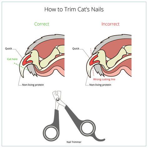 How To Trim Cat's Nails - How To Trim Cat's Nails How to cut cat nail veterinary instruction Cat Care Tips, Pet Care, Trim Cat Nails, Cut Cat Nails, Trimming Dog Nails, Bunny Care, Cat Hacks, Cat Info, Kitten Care