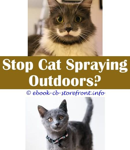 Burts Bees Cat Spray