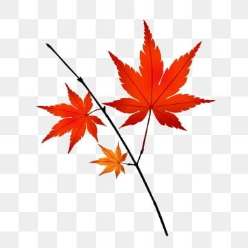 Maple Leaf Red Leaves Leaves Fall Maple Leaf Clipart Decoration Maple Leaf Illustration Png Transparent Clipart Image And Psd File For Free Download Autumn Leaves Maple Leaf Red Leaves