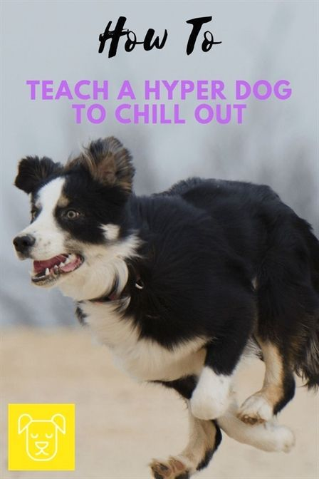 Dog Training Las Vegas Board And Train Dog Training Near Me Dog