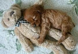 not only humans like teddy bears....make your heart melt!