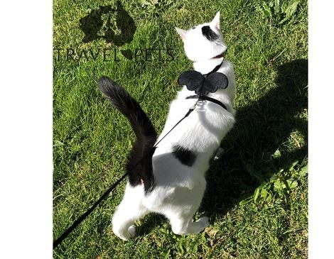 Buy Cat Leash Harness With Wings Cat Leash Buy A Cat Owning