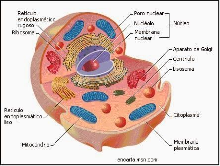 Pin En Biología Celular
