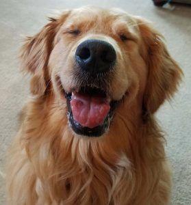 Best Treats For Puppies Puppy Treats Dog Training Treats Dog Treat Recipes