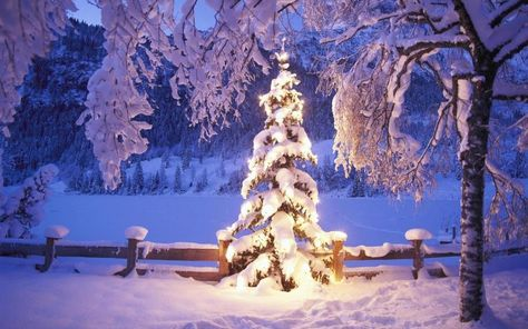 Christmas Tree Lights Wallpaper Background Hd Wallpapers