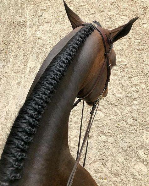 Equestrian Chic, Equestrian Outfits, Equestrian Fashion, Horse Mane Braids, Horse Hair Braiding, Cute Horses, Horse Love, Beautiful Horses, Horse Grooming