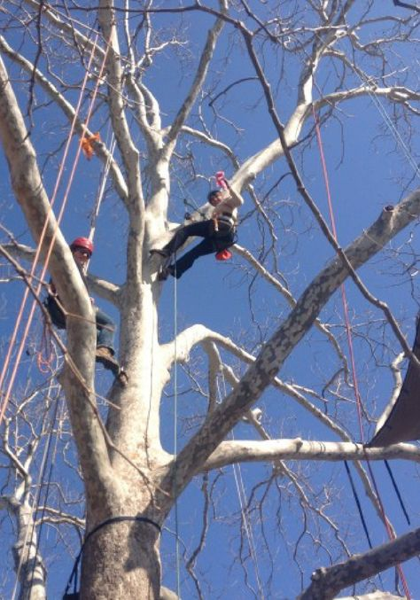 Take tree climbing to the extreme!
