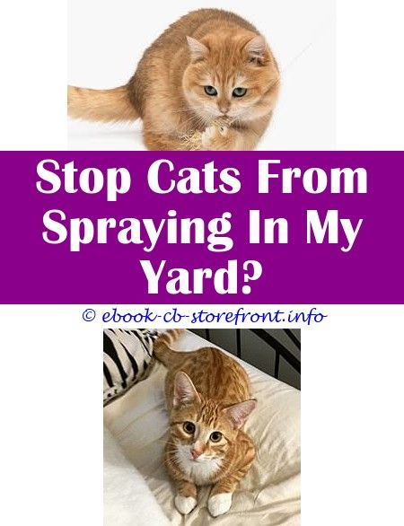 what is cat spray smell