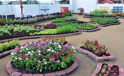 Vegetable Garden Ideas Philippines Vegetablegardenideas Plantering Odla Gronsaker Tradgard Inspiration
