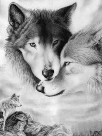 Pin By Nadia Fletcher On Dessin Cool Wolf Drawings Wolf Love Animal Drawings