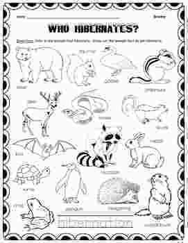 Free Printable Coloring Pages Hibernating Animals Which Animals Hibernate By Fun With First Graders Animals That Hibernate Hibernation Which Animals Hibernate