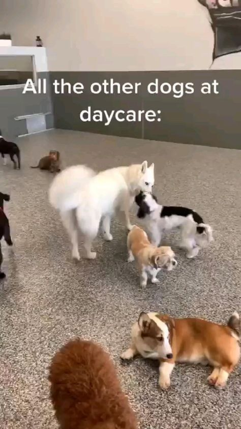 cute and funny dog video
