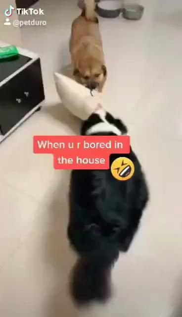 When You Are Bored In The House Video Dog Gifs Online Pet Store Cute Dogs