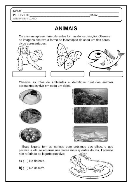 Animais Classificacao Com Imagens Atividades Animais