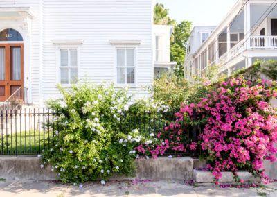 Photos Of Charleston Sc Explore Charleston Backyard Flowers Garden Charleston